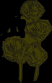 Sketch of California Poppy's