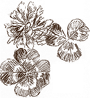 Vineyard stones sketch