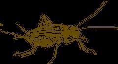 Cricket Sketch