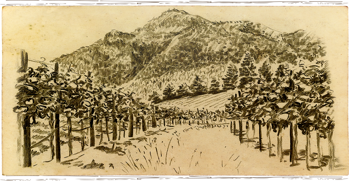 Anakota vineyard image sketch within Knights Valley AVA in Sonoma County